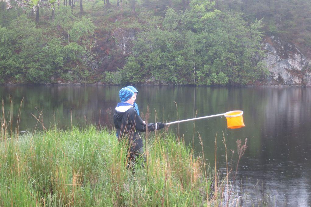 Elever fra Pollen skule jakter dafnier i forbindelse med lansering av Forskningskampanjen 2013