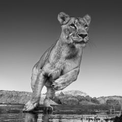 Emma, foto David Yarrow