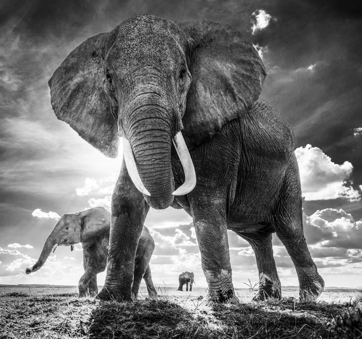 The Untouchables, foto David Yarrow